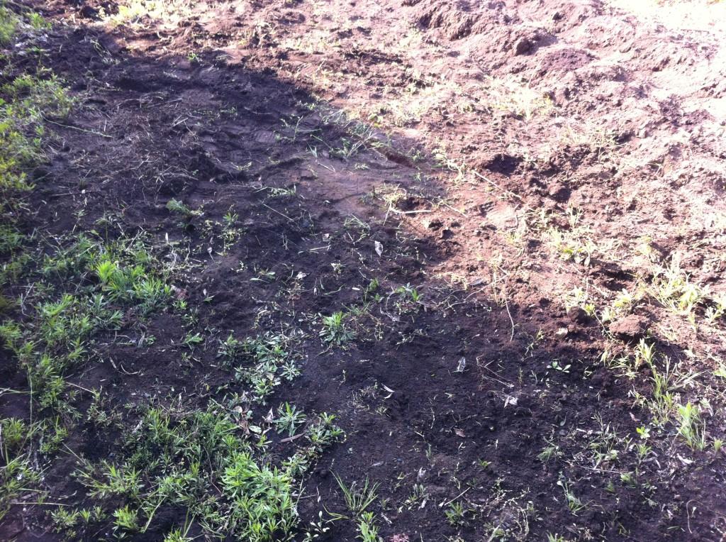 里芋植え付け前に耕す