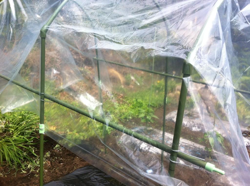 トマトの雨除け菜園セット⑤
