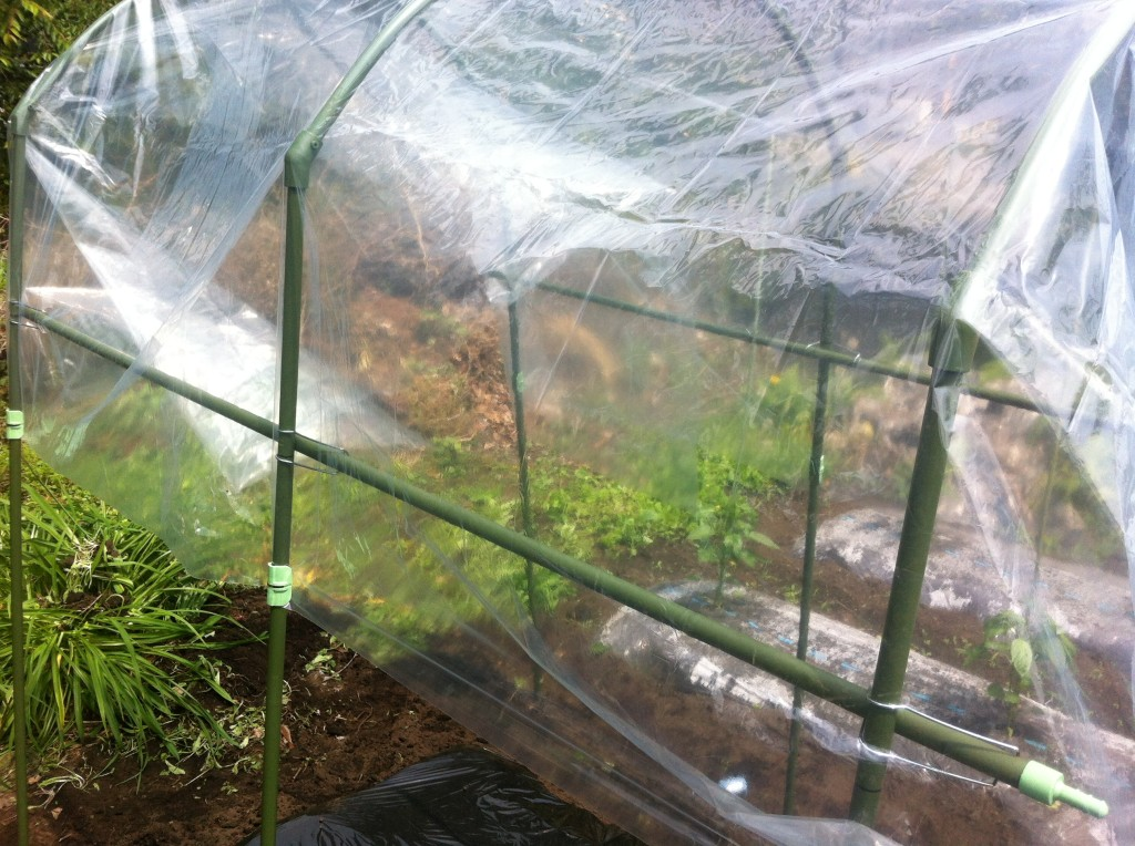 トマトの雨除け菜園セット⑥