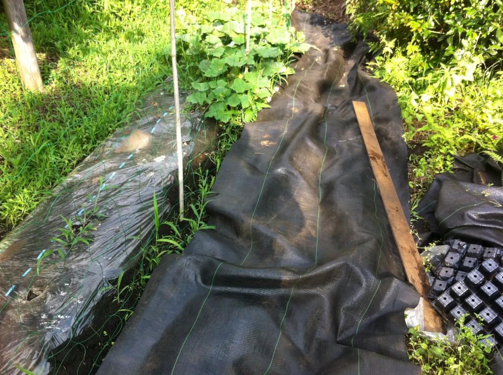 雑草の上に防草シート
