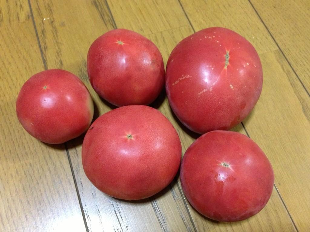 初収穫したトマト(7月下旬)