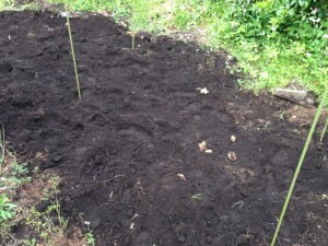 里芋栽培用の区画整備(5月17日)
