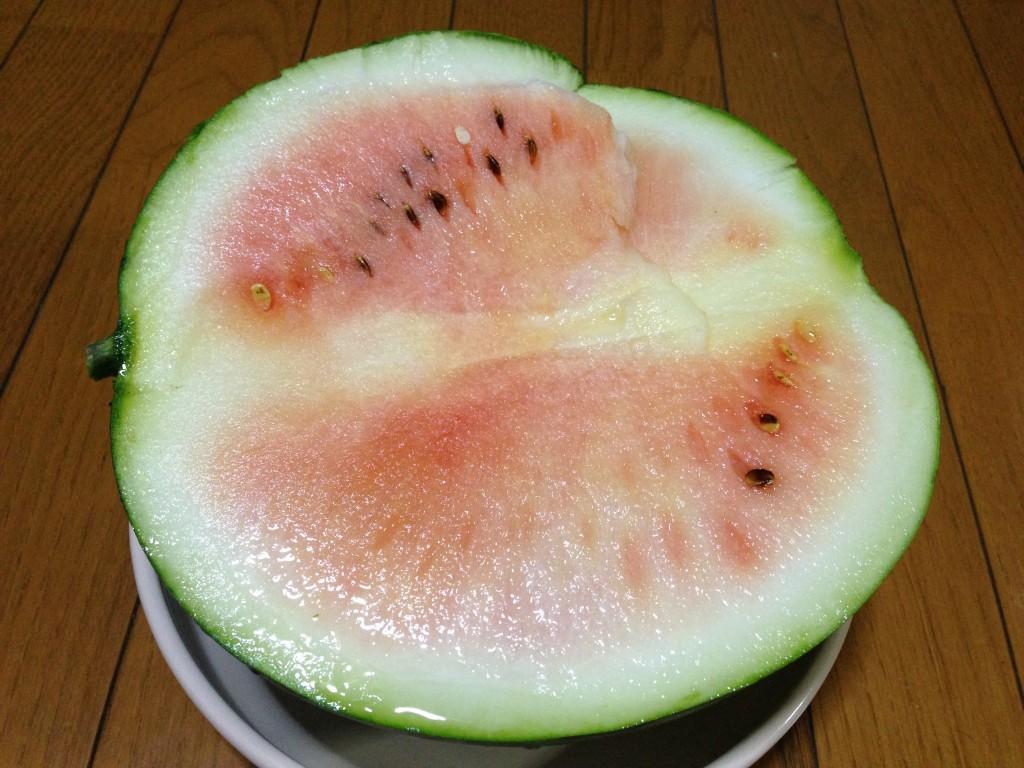 早過ぎた収穫のすいか②(7月19日)