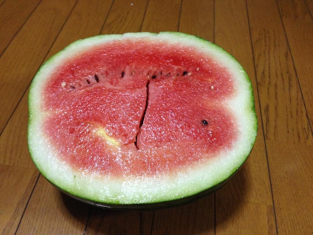 「すいか」2個目の収穫②(7月27日)