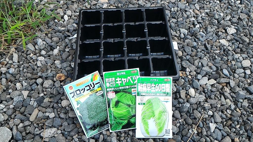 冬野菜の苗作り①(8月13日)
