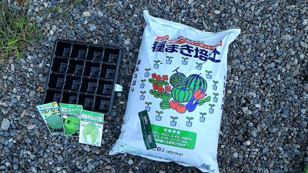 冬野菜の苗作り②(8月13日)