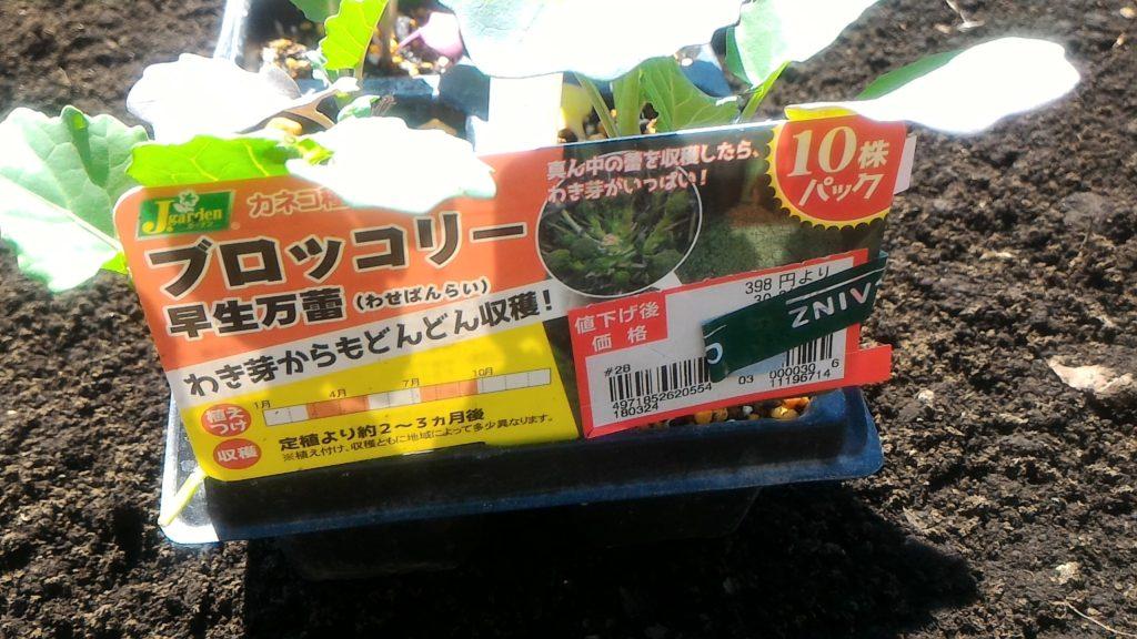 購入したブロッコリーの苗(2018/3/25)